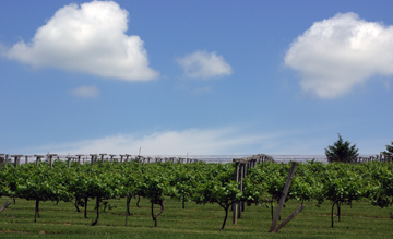 Wisconsin vineyards